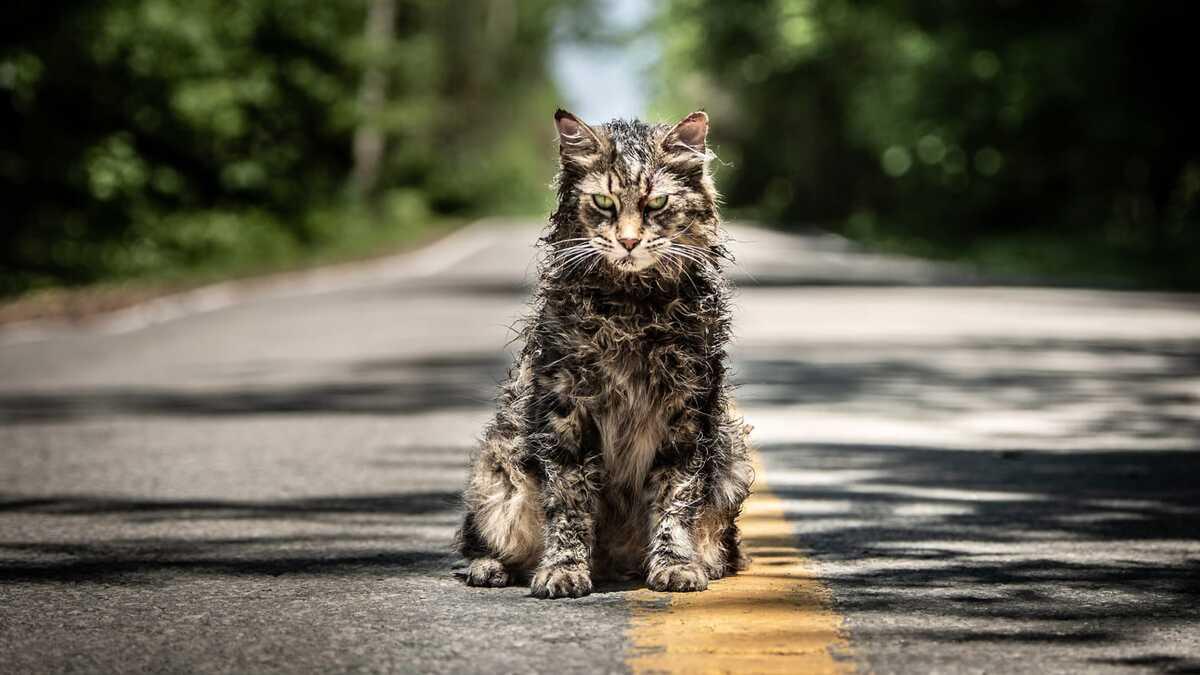 На Paramount+ выйдет приквел «Кладбища домашних животных»