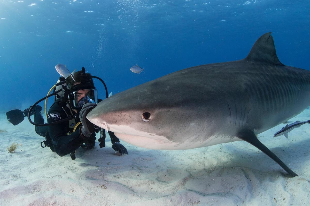 Вышел трейлер документального фильма о вымирании акул, режиссером которого выступил Элай Рот